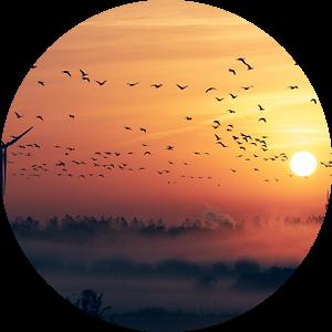 Vogeltrek met Zonsopkomst en Mist van Wahid Fayumzadah