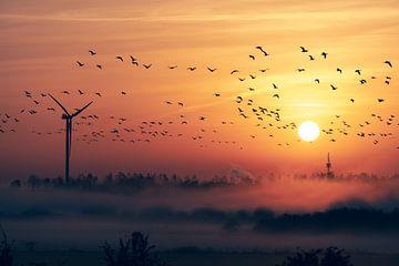 La migration des oiseaux avec le lever du soleil et le brouillard sur Wahid Fayumzadah