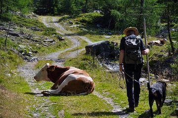 Hiking met de boswachter van Tjeerd Langstraat
