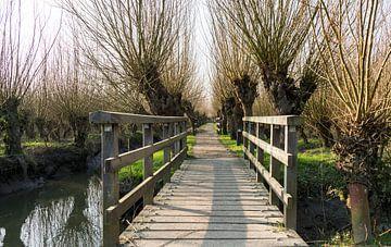 houten bruggetje en een pad met knotwilgen van Compuinfoto .