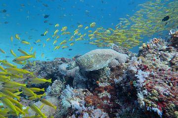 Schildpad in een school vissen von Daniëlle van der meule