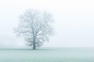 One tree, one world.