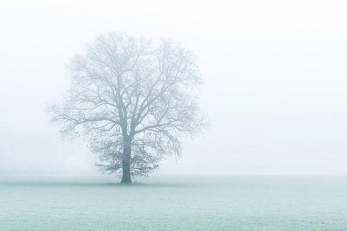 One tree, one world. van