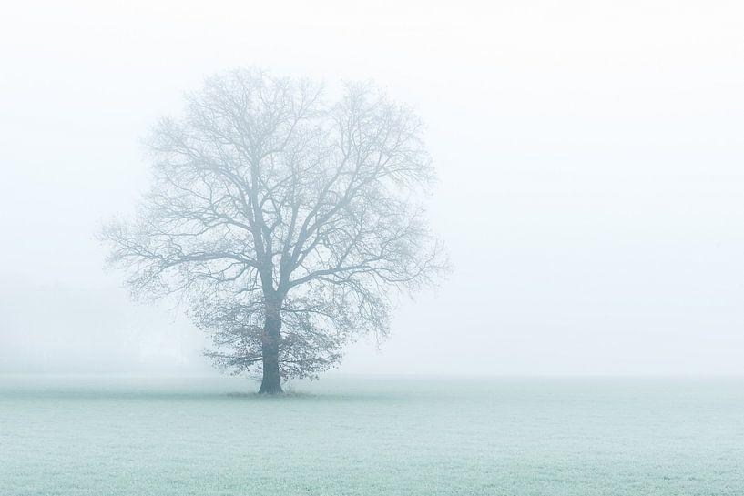 One tree, one world. van Davy Sleijster
