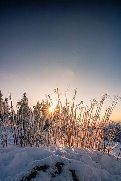 Besneeuwd landschap met zonneschijn en warme kleuren van Fotos by Jan Wehnert