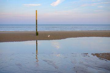 Möwe am Pol am Strand von Johan Vanbockryck