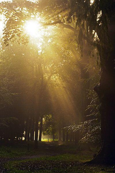 magical light van Dirk van Egmond