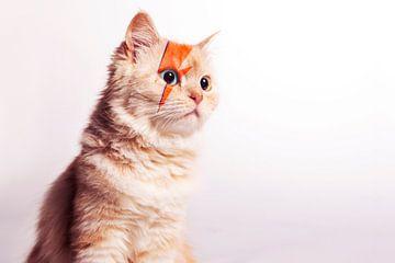 David Bowie, Cat Portrait von Maxime Jaarsveld