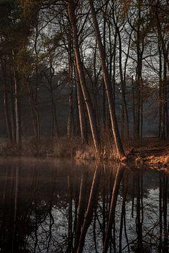Bomen aan de waterrand tijdens zonsopkomst