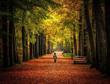Waldallee Herbst von natascha verbij