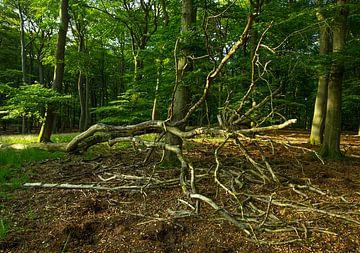 Hoge Veluwe 7008010050 fotograaf Fred Roest van Fred Roest