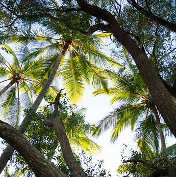 Palmbomen in Australie van shanine Roosingh