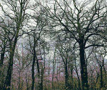 Wald mit Herbstblüten von Anna Marie de Klerk