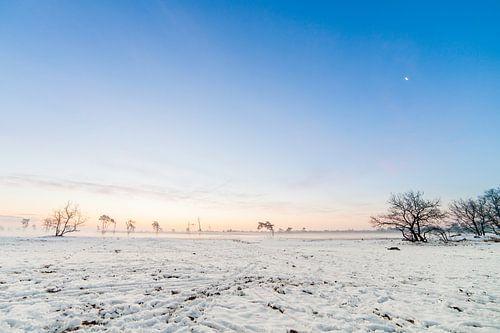 Sneeuwlandschap  van Thomas van der Willik