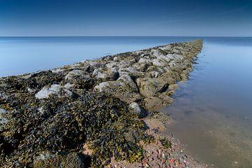 Strekdam met blaaswieren aan de Waddenzee bij aflopend tij van