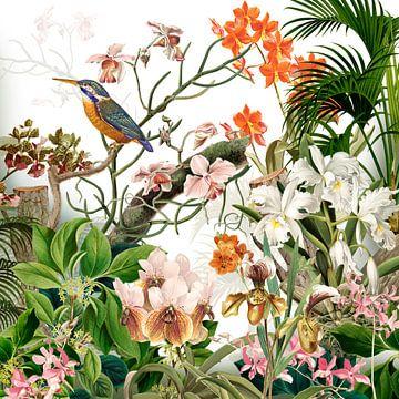 De ijsvogel met de orchideeën van christine b-b müller