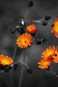 Flowers Colorkey van