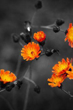 Flowers Colorkey van Malte Pott