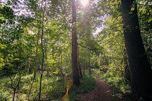 Typisch niederländische Wälder in Oirschot