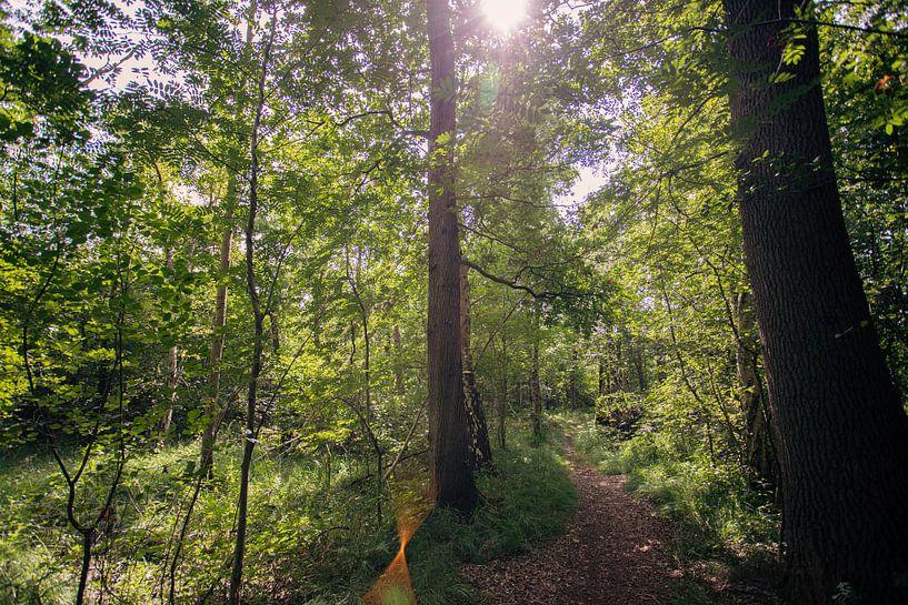 Typisch niederländische Wälder in Oirschot von Angela Kiemeneij