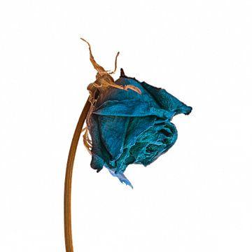 Blue Flower Power
