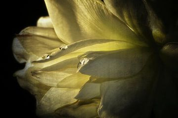 Tropfen auf einer Blüte von Claudia Evans
