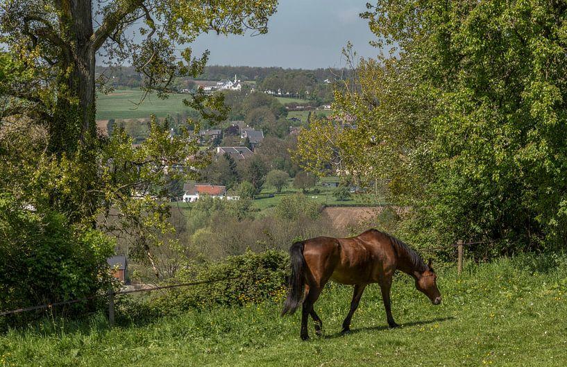 Paard in de wei op de heuvels rond Epen in Zuid-Limburg van John Kreukniet