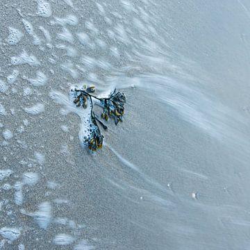 zeewier van Ria Bloemendaal