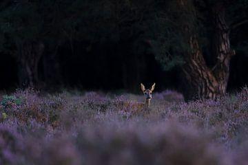 Hirsche im Moor von Pieter Roest