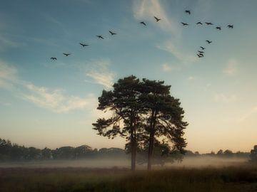 Wie die Vögel fliegen von Lex Schulte