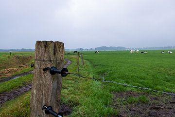 Schrikdraad om weiland met koeien van Lucas Planting