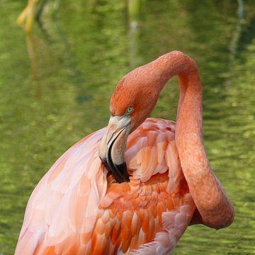 Pink Flamingo van Ralf Schroeer