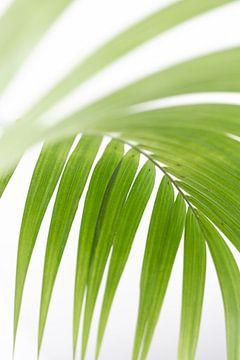 Palmblad van Jefra Creations