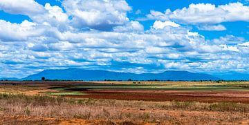 Tsavo East vlakte van Alex Hiemstra