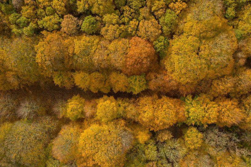 Een Nederlands bos in herfstkleuren van bovenaf gezien. van Menno Schaefer