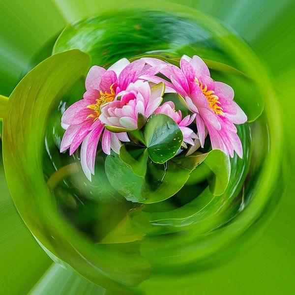 roze waterlelies, planet compositie van Rietje Bulthuis