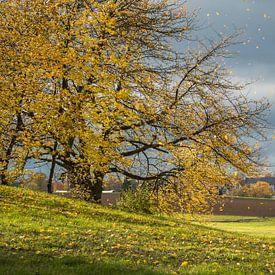 Herbstblätter Regen von Jürgen Schmittdiel Photography