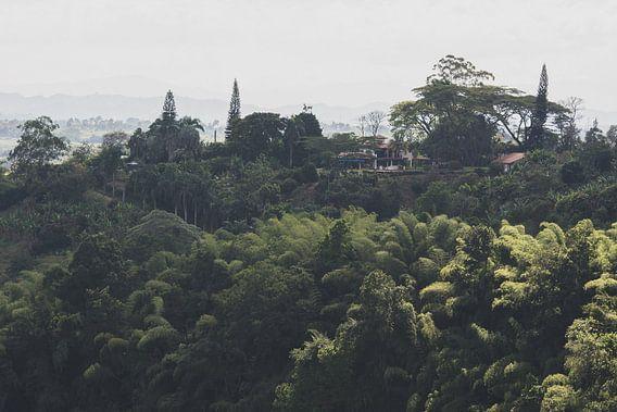Uitzicht vanuit de koffieplantage