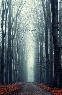 Misty Lane von Martin Podt