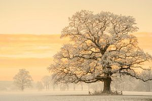 Winter Licht