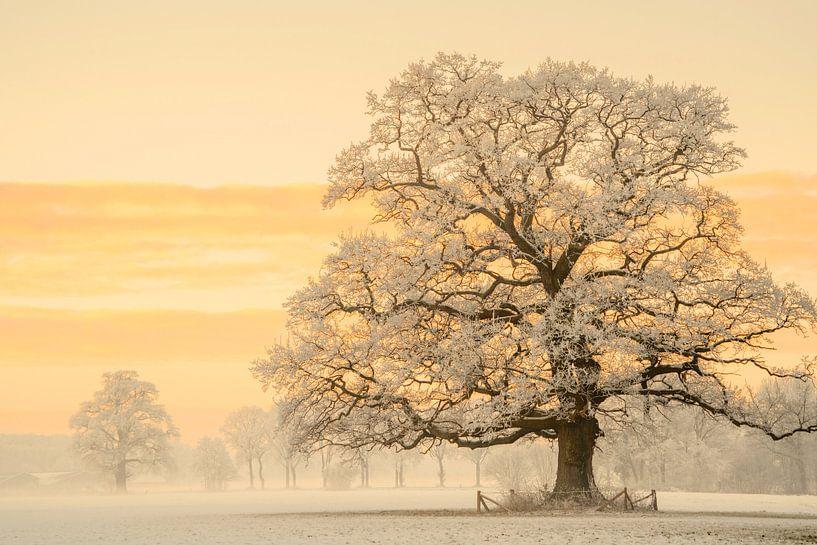 Winter Licht van Lars van de Goor