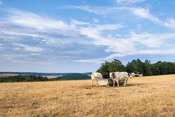 Kühe auf dem Feld von Alexander van der Dussen