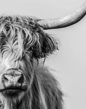 Porträt eines schottischen Highlanders in schwarz-weiß von Ans Bastiaanssen