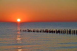 Zoutelande sunset, Glad je suis ici (BLØF)
