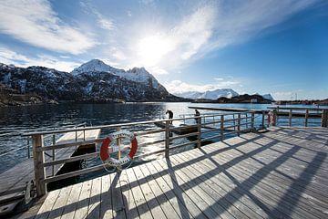 arctisch zeeleven von Lisette de Rade