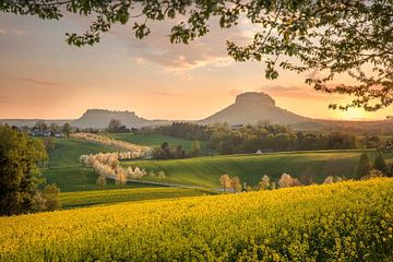 Frühling in der Sächsischen Schweiz von Sergej Nickel