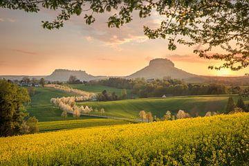 Lente in Saksisch Zwitserland van Sergej Nickel