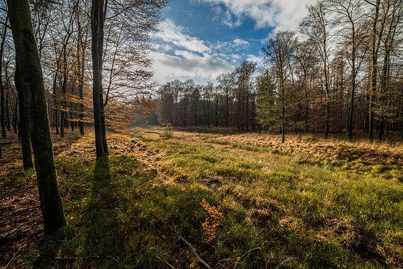 Rustieke plek in de natuur