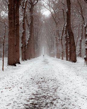 Wintertag in den Niederlanden von Colin Bax
