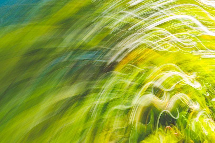 schwankendes Gras von Jan Peter Jansen